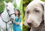 Hund und Pferd